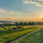 The past, the present and future of the UK farmland market